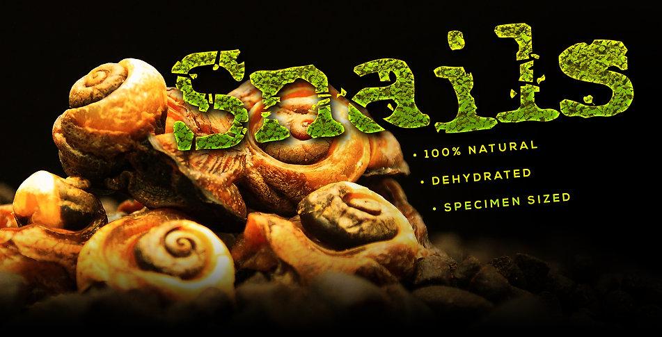 Snails Roller Banner.jpg