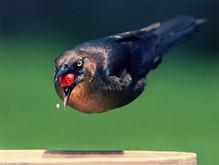 birds-4691.jpg