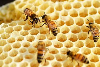 bees-352206_1280.jpg