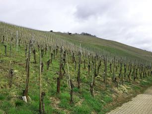 Saksan viinimatkat_2.jpg