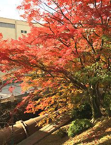 京都蹴上インクラインの紅葉