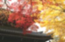 京都南禅寺の紅葉