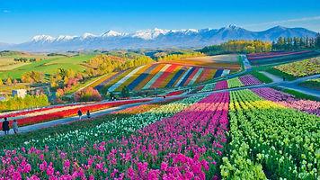 flower-fields-biei-hokkaido-japan-1920x1