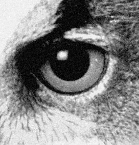 Studio Winkelmann Eye For Detail
