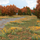 Fall Scene Day