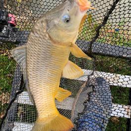 fish net 4a.jpg