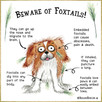Foxtails can harm your dog