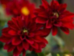 Simply Red-17.jpg