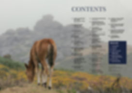 dartmoor mag contents.jpg