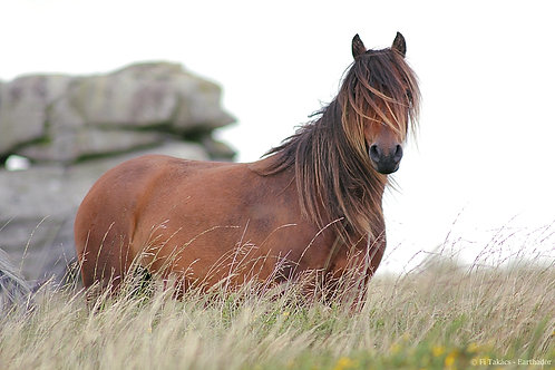 A King's Mare