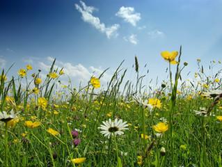 La salud y las estaciones: La primavera
