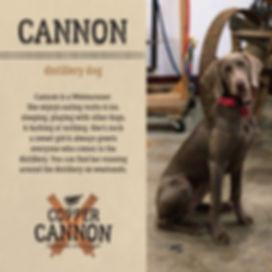 Bio_Social_Cannon[1].jpg
