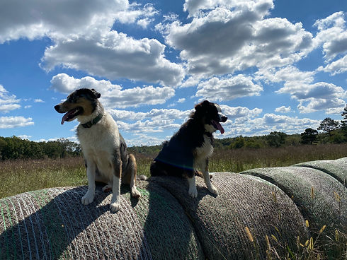Two winery pets sitting on the lookout