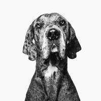 Liverpool Photographer Studio Pet Friendly