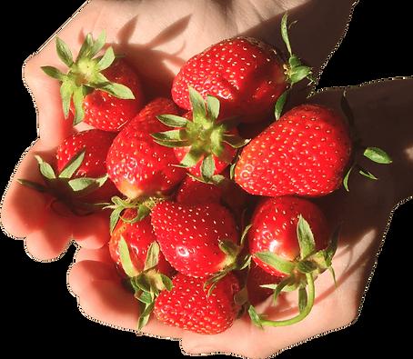 fraises Caillan+.png