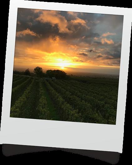 Sonnenuntergang_Pfalz.png