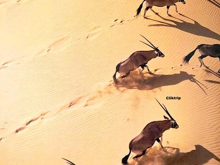 Namíbia - Destino certo para os amantes da natureza