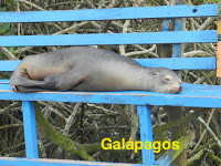 Galápagos - Teoria de Darwin na prática !!! Fascinante !