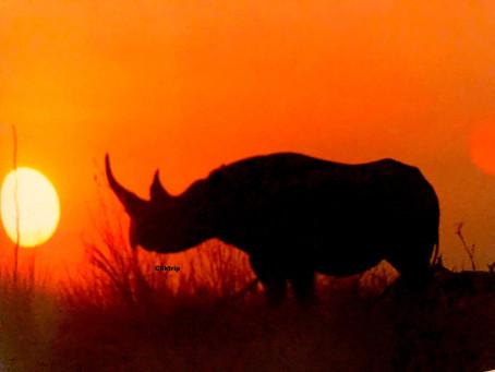 Etosha National Park - A maior reserva da África !!!