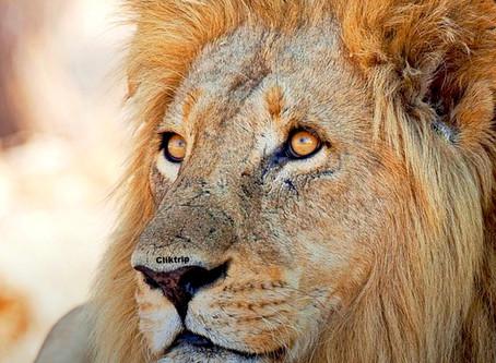 Quenia - Masai Mara - Sintonia com a Natureza