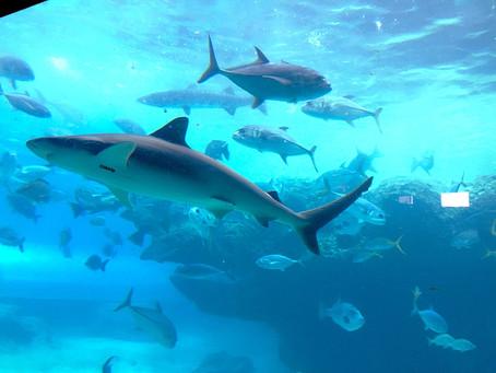 Atlantis - Uma viagem para toda Família