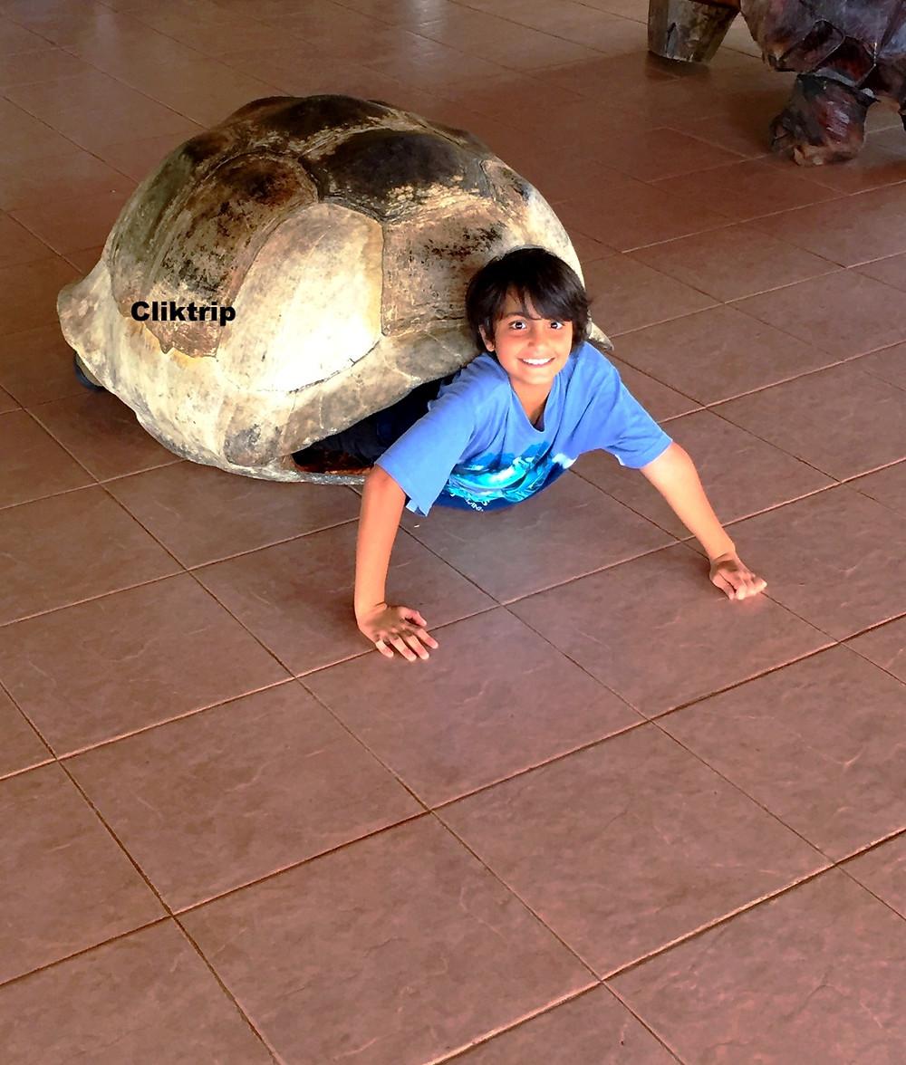 Tartaruga gigante Galápagos
