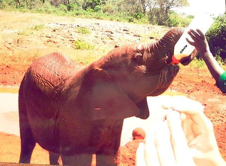 Nairobi - Rota dos Safaris