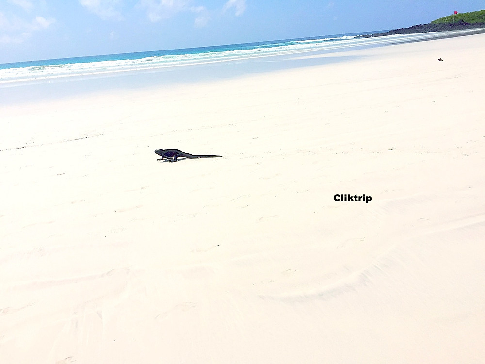 Tortuga Bay Galápagos