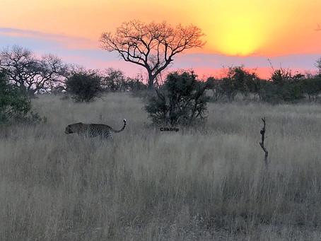 Kirkman's Camp : O melhor safári na África do Sul