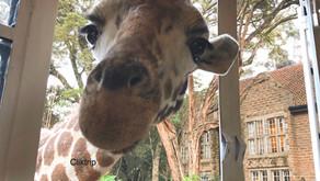 Giraffe Manor : dicas de como reservar !!!