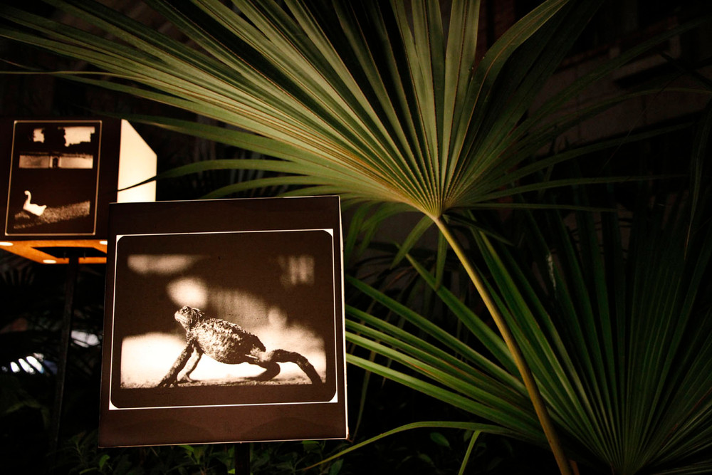 """Installation view of Giacomo Brunelli's """"The Animals"""""""