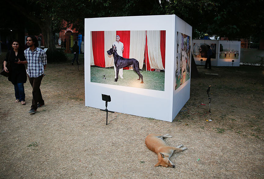 """Installation view of Karan Vaid's """"The Indian Dog Show Project: Best in ShowPerfect Citizen"""""""