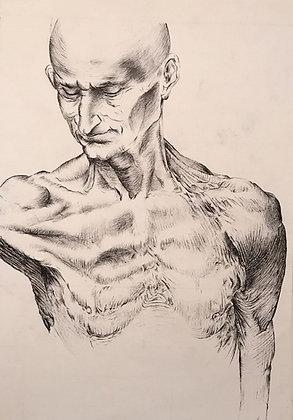 'Anatomical Study'