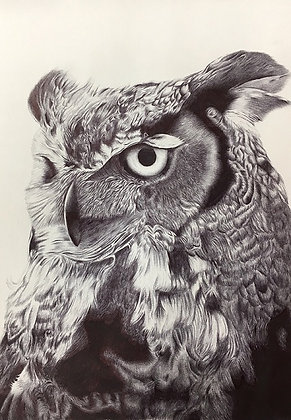 'The Owl' - Limited Edition Print