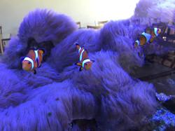 Nemo in the Fish tank