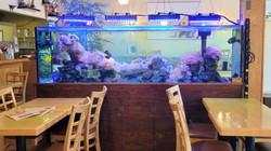 Our Beautiful Fish Tank