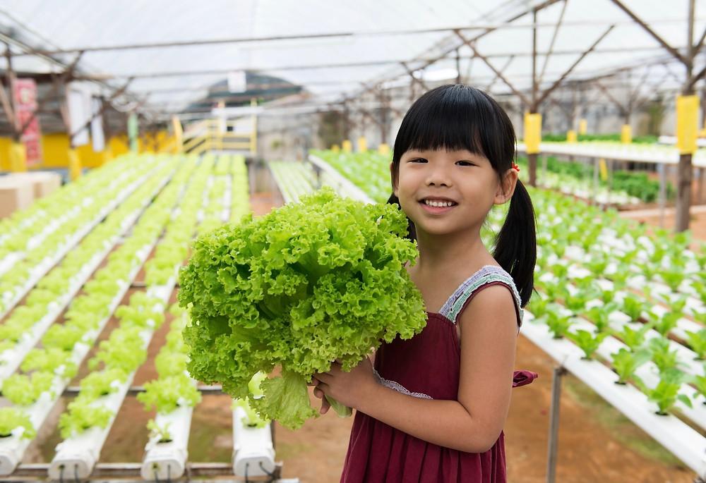Grow your own hydroponic veggie garden