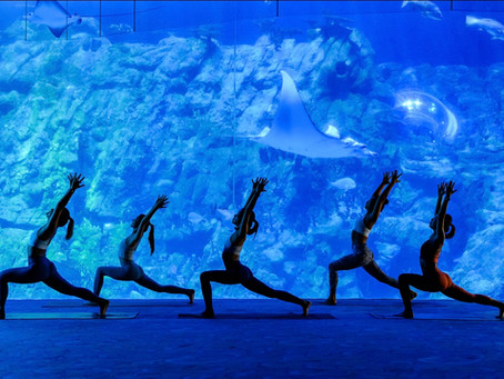 Hong Kong's Ocean Park launches Green Staycation