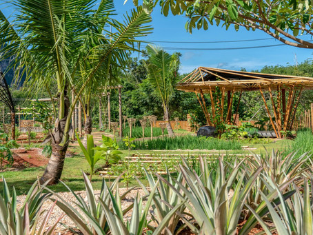 Eco-resort takes root in Thailand's Krabi