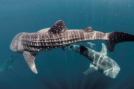 Whale of a time with Qatar Airways' exploration cruises