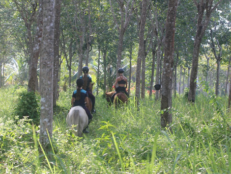 Riding stables for kids opens in Phuket
