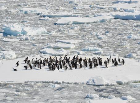 Antarctica flights set to take off in November