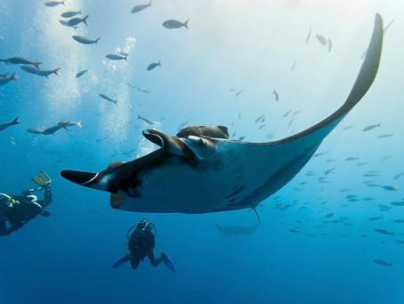 Exploring Fiji's best dive sites