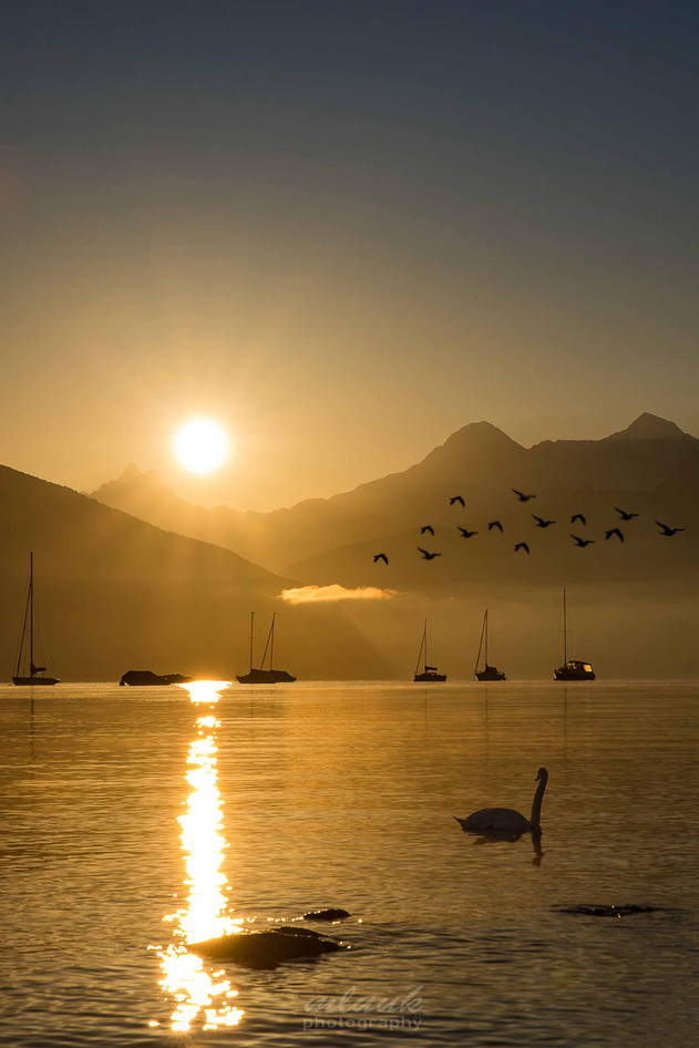 Morgenstimmung am Thunersee (1)