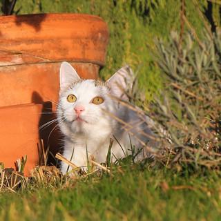 Katze weiss.jpg