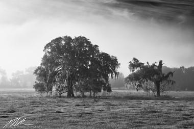 Sunrise trees, Santos