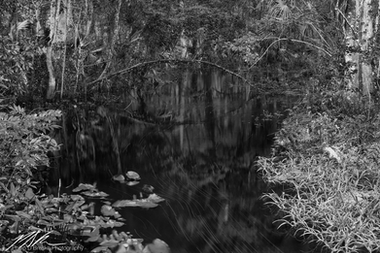 Long exposure of a Silver River tributary, Ocala National Forest, August 2017