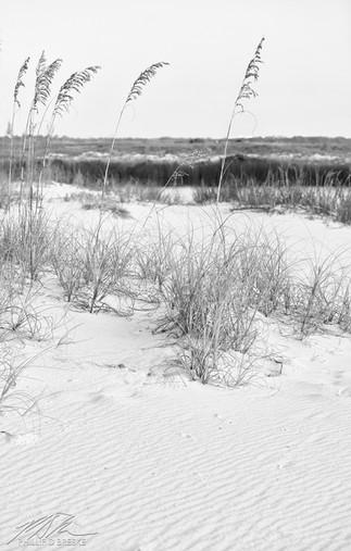 Sand dunes at Gulf Islands National Seashore, Pensacola
