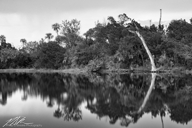 Dead tree on lake, Ozello, September 2018