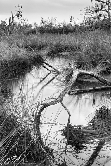 Marsh and dead tree, Ozello, September 2018